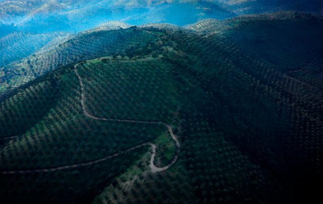 Documental: cultura del olivar de sierra en los Pedroches Fotografía Pliegues